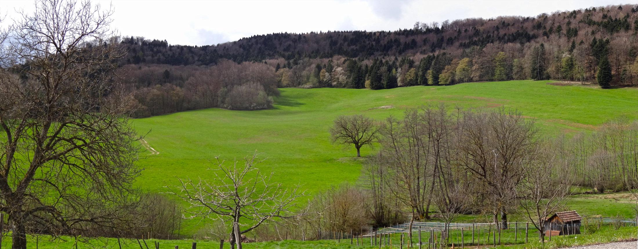 Le jura alsacien donne l impression d un paysage for Paysage definition
